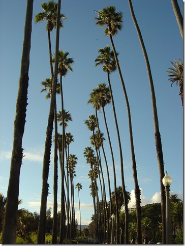 Santa_Monica_Palm_Trees